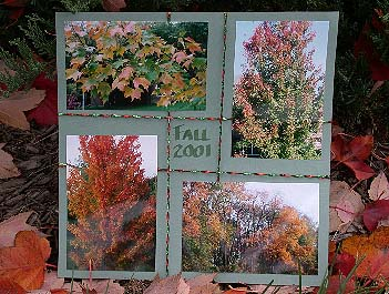 Autumn Bounty Scrapbook Page